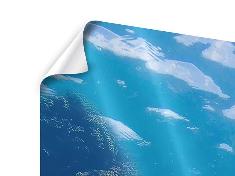 Panorama Poster 3-teilig Die Wasserschildkröte