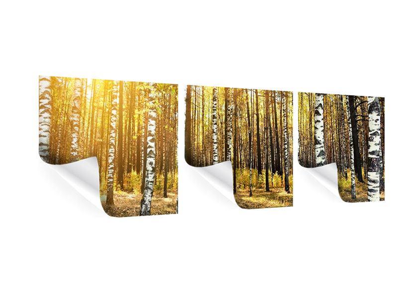 Panorama Poster 3-teilig Birkenwald
