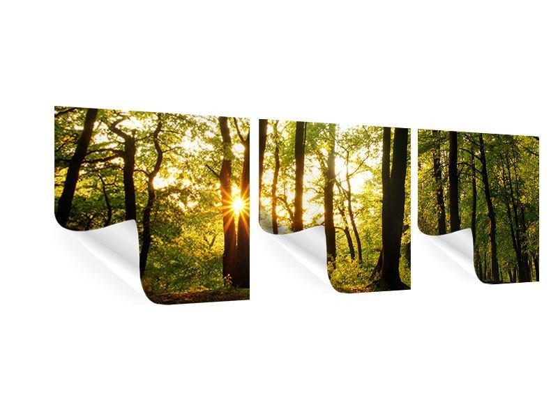Panorama Poster 3-teilig Sonnenuntergang zwischen den Bäumen