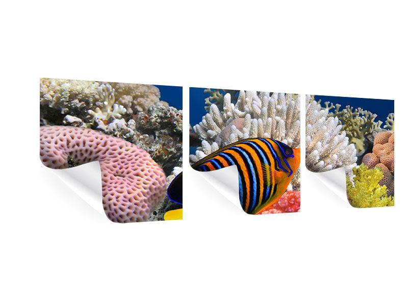 Panorama Poster 3-teilig Mit den Fischen tauchen