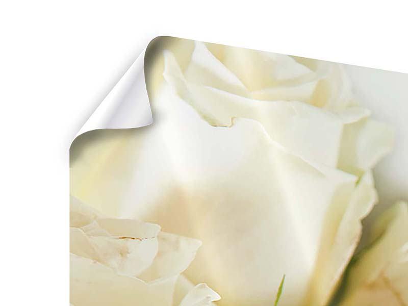 Panorama Poster 3-teilig Weisse Rosen