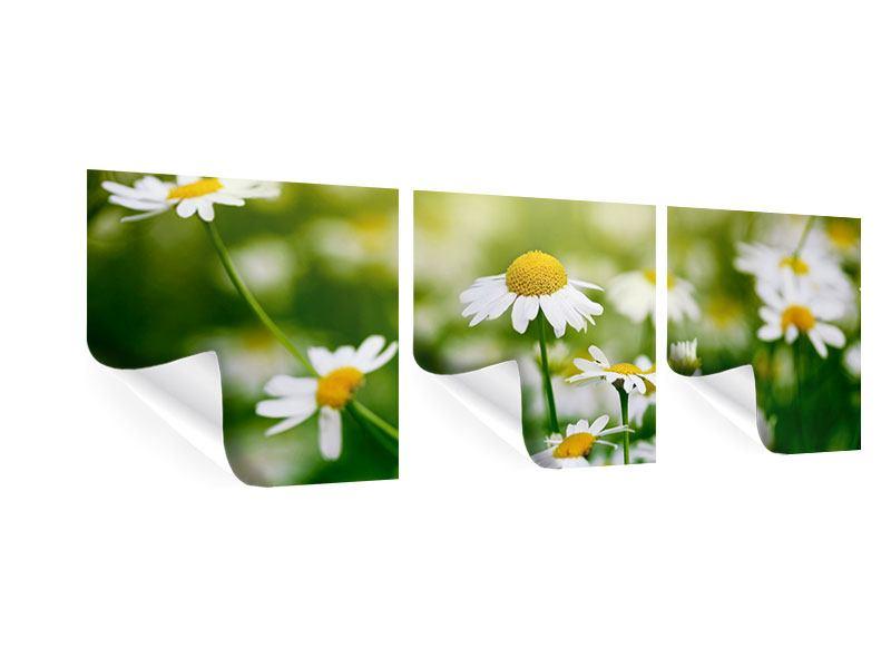 Panorama Poster 3-teilig Die Gänseblümchen
