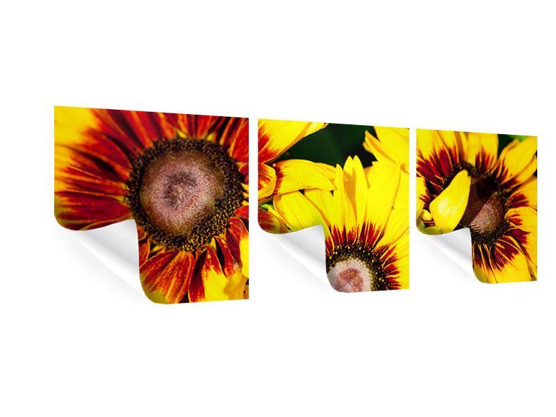 Panorama Poster 3-teilig Reife Sonnenblumen