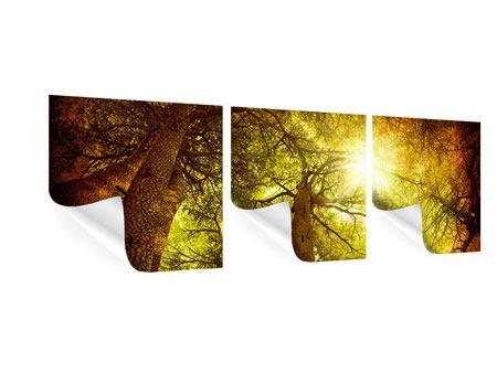 Panorama Poster 3-teilig Cedar Baum