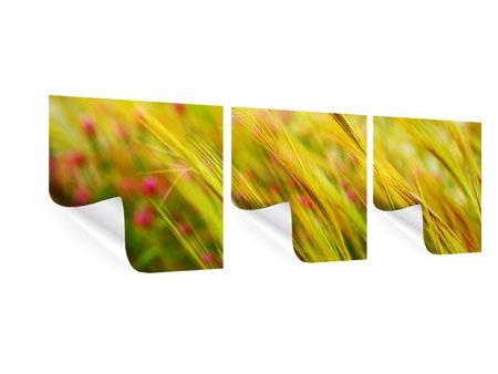 Panorama Poster 3-teilig Das Weizenfeld