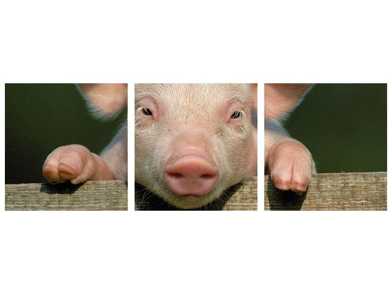 Panorama Poster 3-teilig Schweinchen Namens Babe