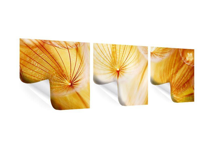 Panorama Poster 3-teilig Close Up Pusteblume im Licht