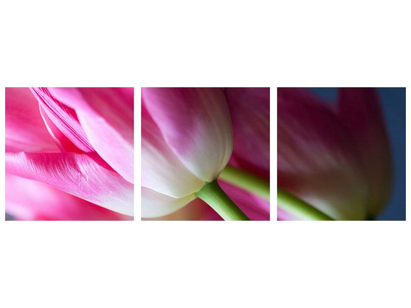 Panorama Poster 3-teilig Makro Tulpen