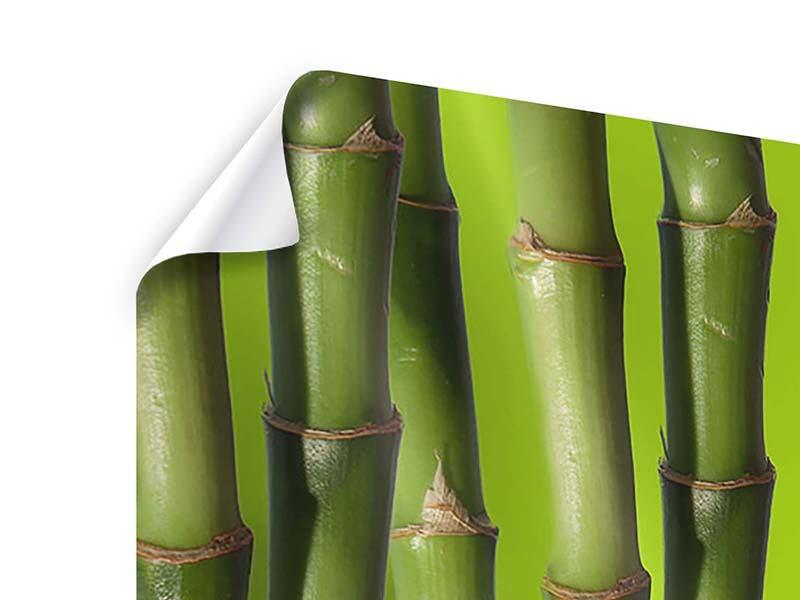 Panorama Poster 3-teilig Der Bambus