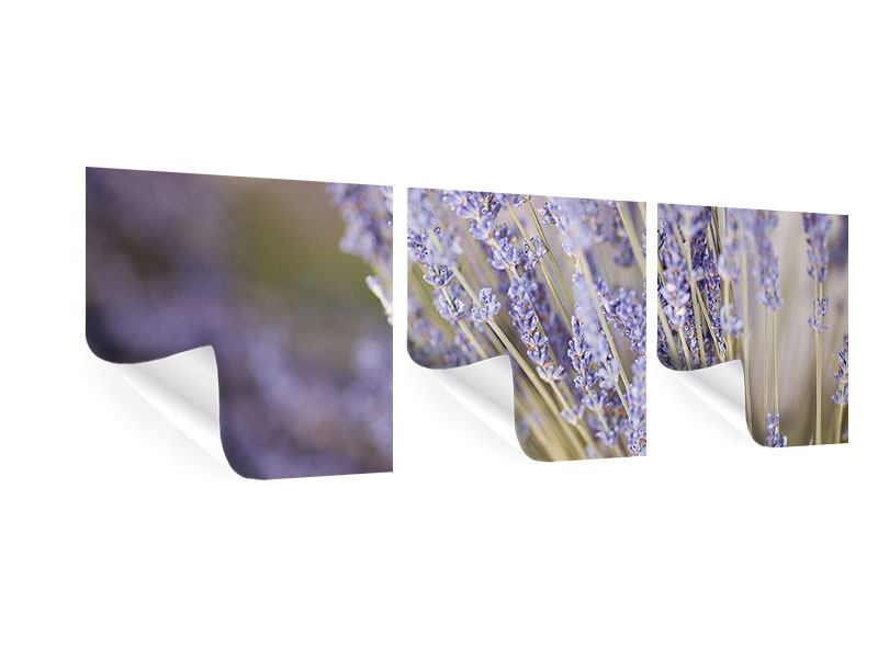 Panorama Poster 3-teilig Lavendel XXL
