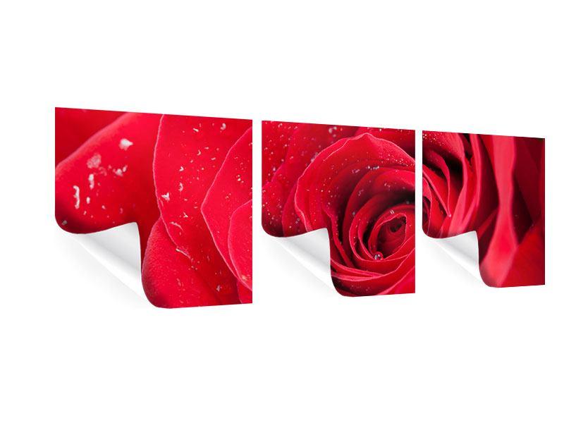 Panorama Poster 3-teilig Rote Rose im Morgentau