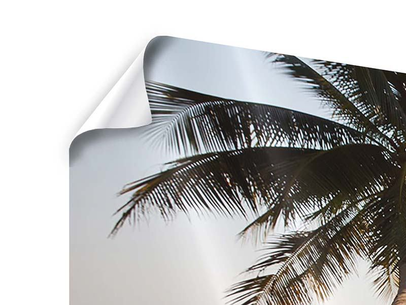 Panorama Poster 3-teilig Palme