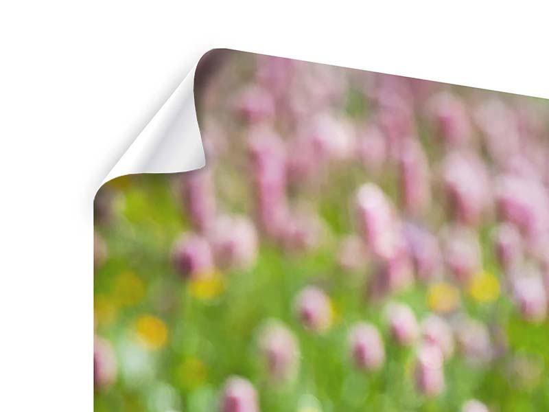 Panorama Poster 3-teilig Der Wiesenklee