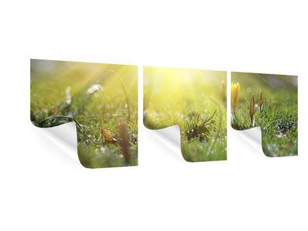 Panorama Poster 3-teilig Blumige Wiese