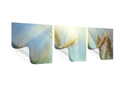 Panorama Poster 3-teilig König des Getreides