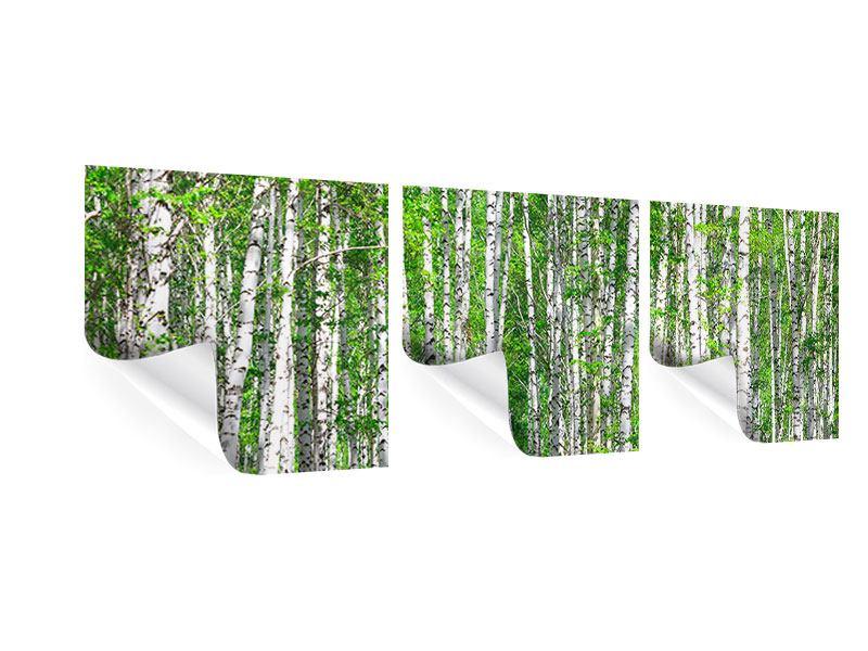 Panorama Poster 3-teilig Der Birkenwald