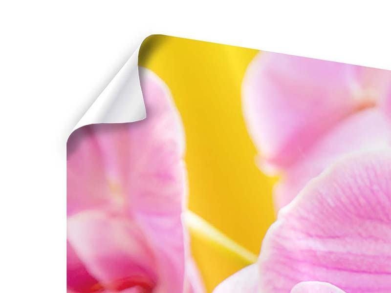 Panorama Poster 3-teilig Königliche Orchideen