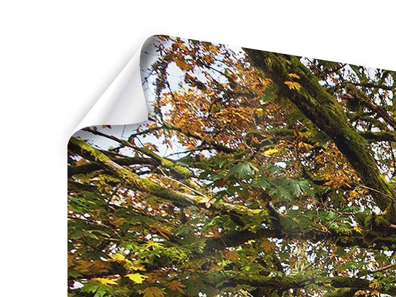 Panorama Poster 3-teilig Mein Lieblingsbaum