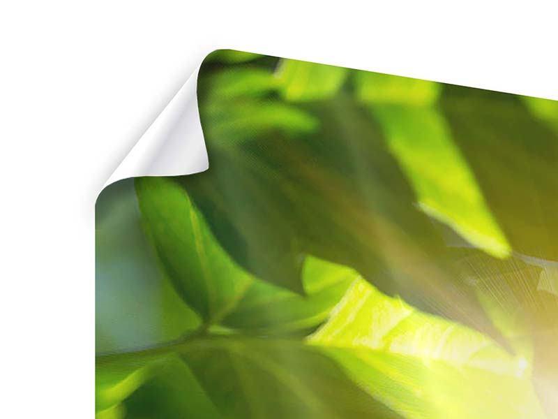 Panorama Poster 3-teilig Es grünt so grün