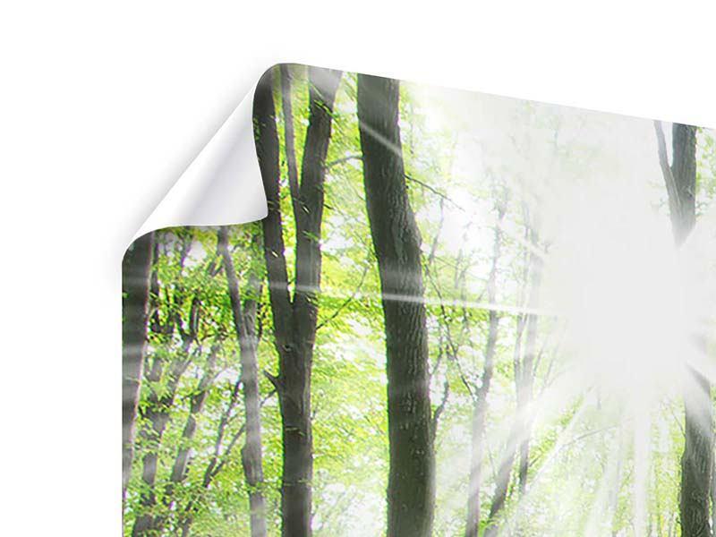 Panorama Poster 3-teilig Magisches Licht in den Bäumen