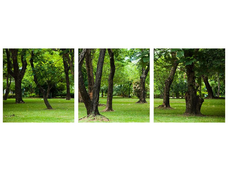 Panorama Poster 3-teilig Kirschbaum-Garten