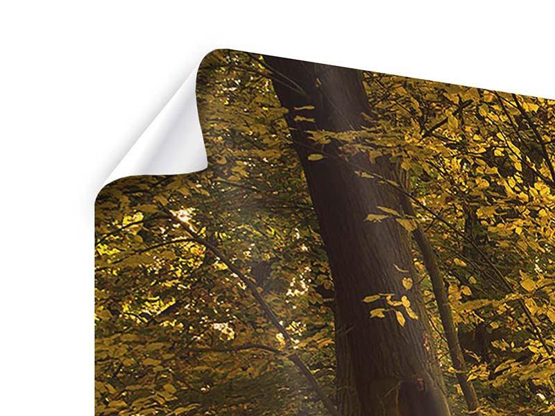 Panorama Poster 3-teilig Herbstlaub