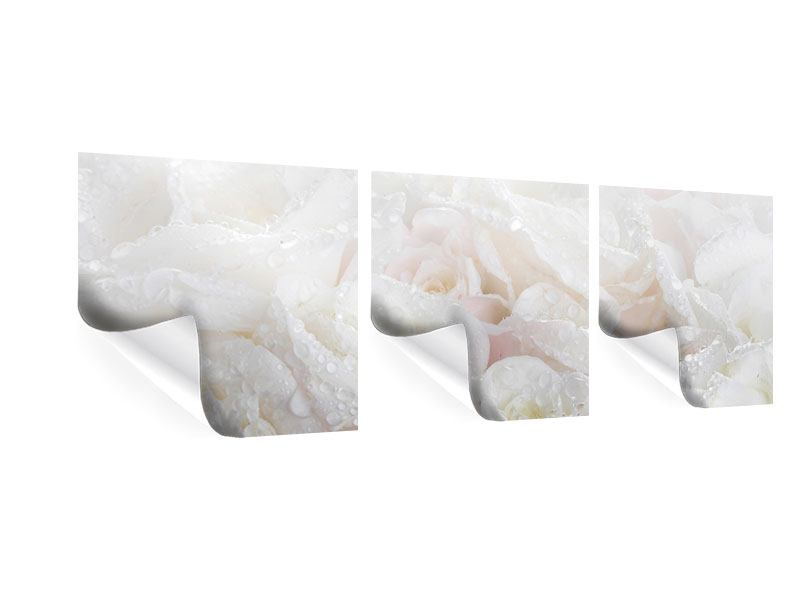 Panorama Poster 3-teilig Weisse Rosen im Morgentau