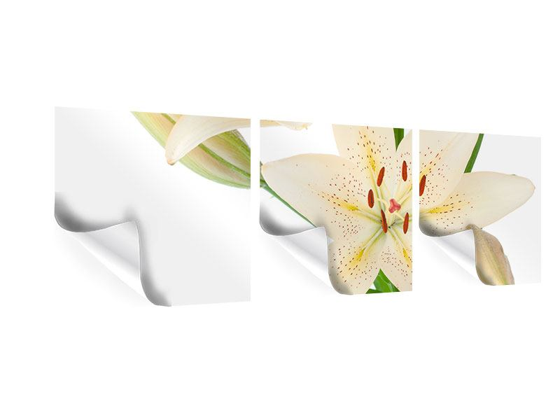 Panorama Poster 3-teilig Weisser Lilienstrauch