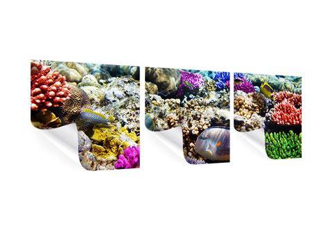Panorama Poster 3-teilig Fischaquarium