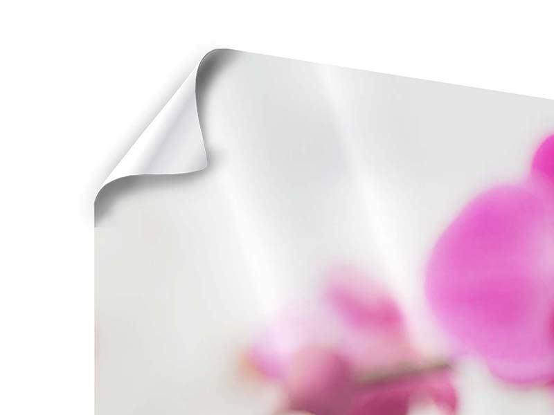 Panorama Poster 3-teilig Das Symbol der Orchidee