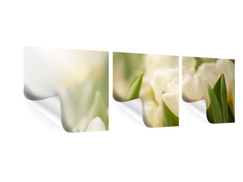 Panorama Poster 3-teilig Tulpenperspektive