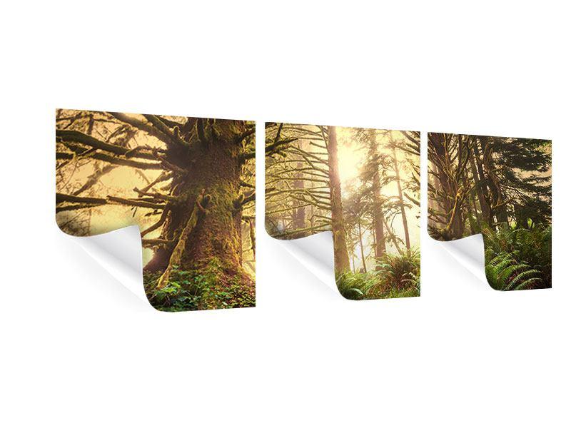 Panorama Poster 3-teilig Sonnenuntergang im Dschungel