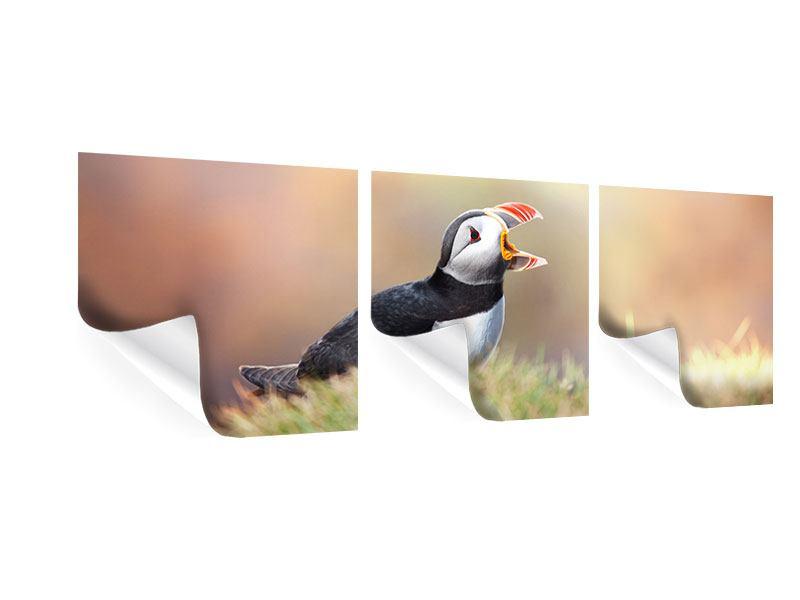 Panorama Poster 3-teilig Der Papageitaucher