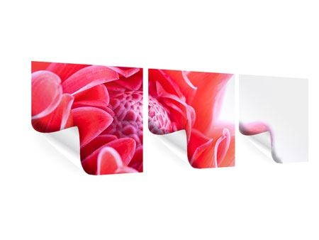 Panorama Poster 3-teilig Etlingera XXL