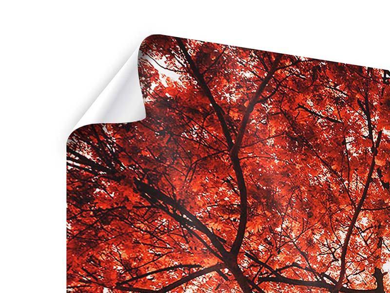 Panorama Poster 3-teilig Herbstlicht