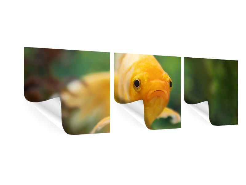 Panorama Poster 3-teilig Der Fisch