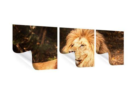 Panorama Poster 3-teilig Löwe
