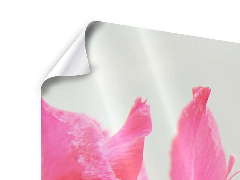 Panorama Poster 3-teilig Gladiolen
