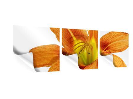 Panorama Poster 3-teilig Die Tiger-Lilie