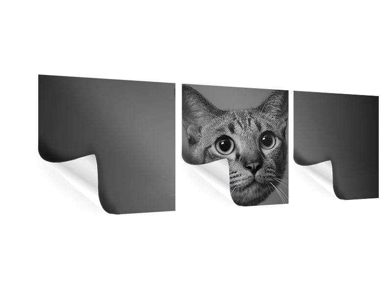 Panorama Poster 3-teilig Katzenlady