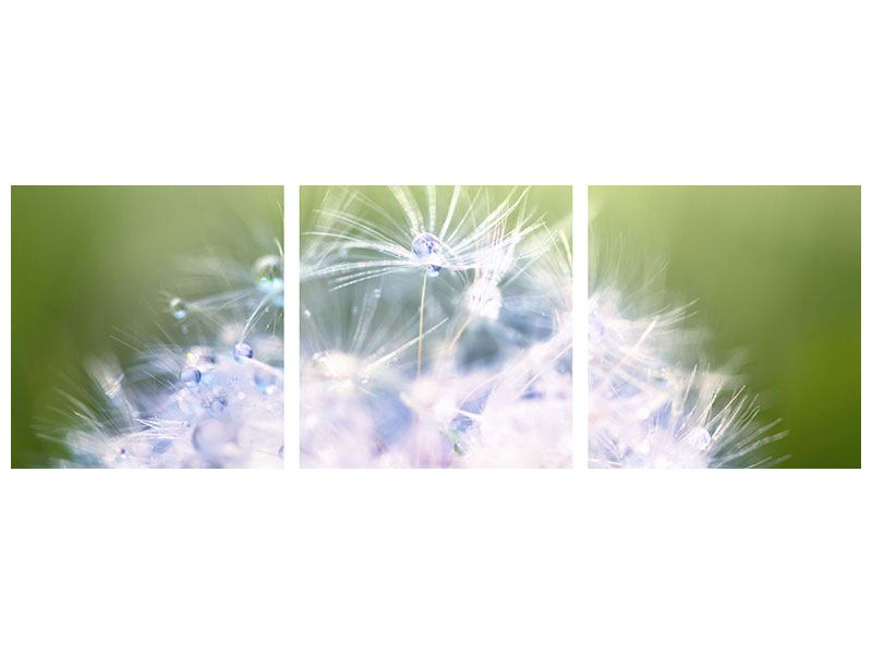 Panorama Poster 3-teilig Pusteblume XL im Morgentau