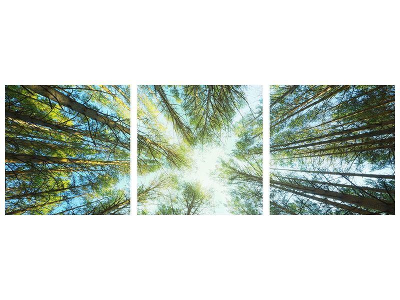 Panorama Poster 3-teilig Kiefernwald