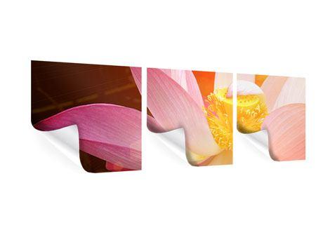 Panorama Poster 3-teilig Close Up Lotus