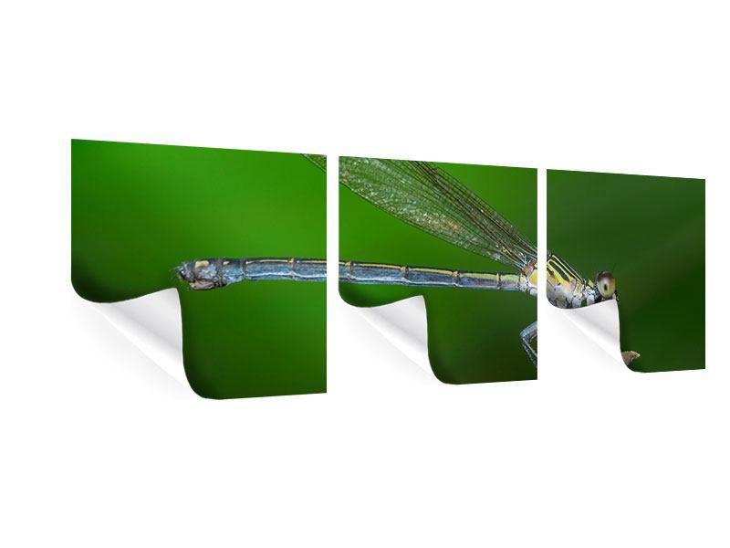 Panorama Poster 3-teilig Die Libelle