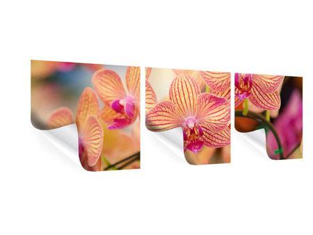 Panorama Poster 3-teilig Exotische Orchideen