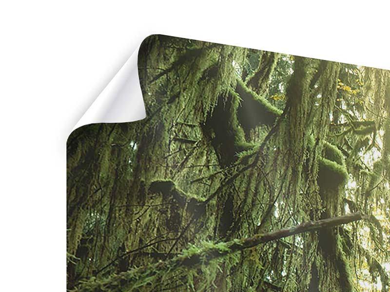 Panorama Poster 3-teilig Verträumter Wald