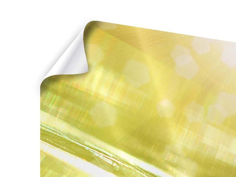 Panorama Poster 3-teilig Marienkäfer im Sonnenlicht