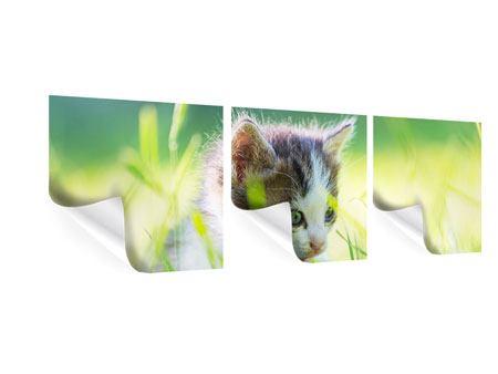 Panorama Poster 3-teilig Kitten