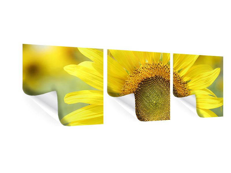 Panorama Poster 3-teilig Die Blume der Sonne