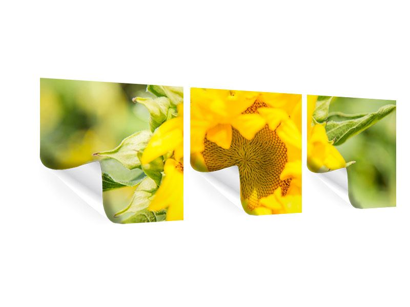 Panorama Poster 3-teilig Wilde Sonnenblume